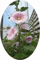190526sanpokaerihana.jpg