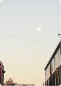 160221hongou-tuki.jpg