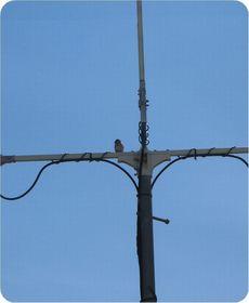 160321suzume-antena.jpg