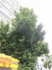 170525ichou-kanayama2.jpg