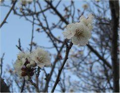 180226umemakinogaikeyoko1.jpg