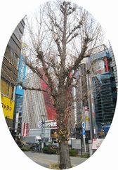 190108kanayamaichou.jpg