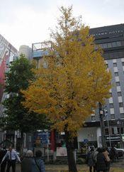 191218kanayamaichou.jpg