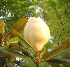 200615sigotogonohana1.jpg