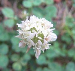 200629sigotogosanpohana1.jpg