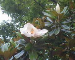 200629sigotogosanpohana2.jpg